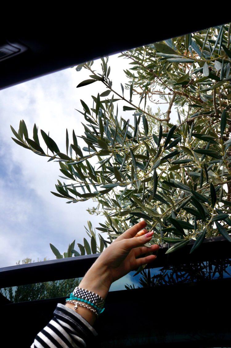 4x4Schweiz-Fahrbericht: Der neue Skoda Karoq 4x4 2017 bei einer ersten Testfahrt auf Sizilien: Oliven Drive-in