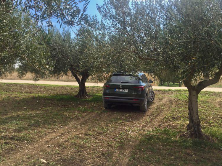 4x4Schweiz-Fahrbericht: Der neue Skoda Karoq 4x4 2017 bei einer ersten Testfahrt auf Sizilien: im Olivenhain von hinten