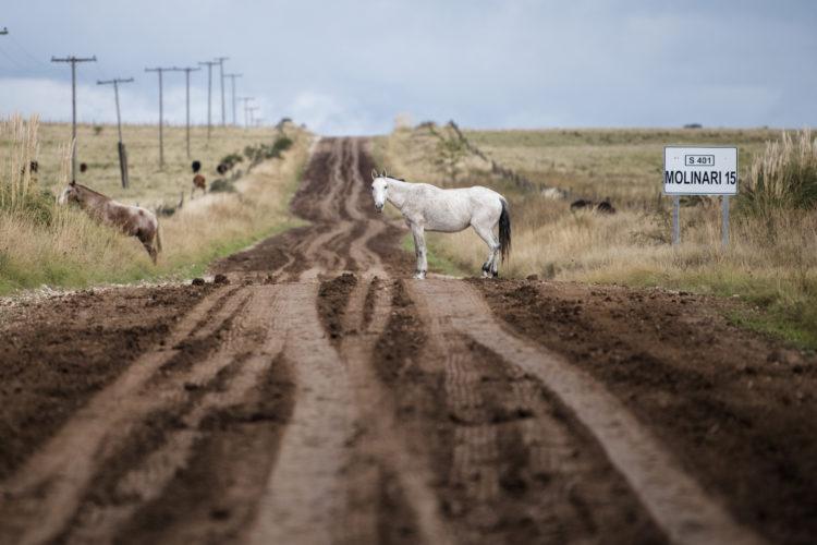 Pferd auf dem Track