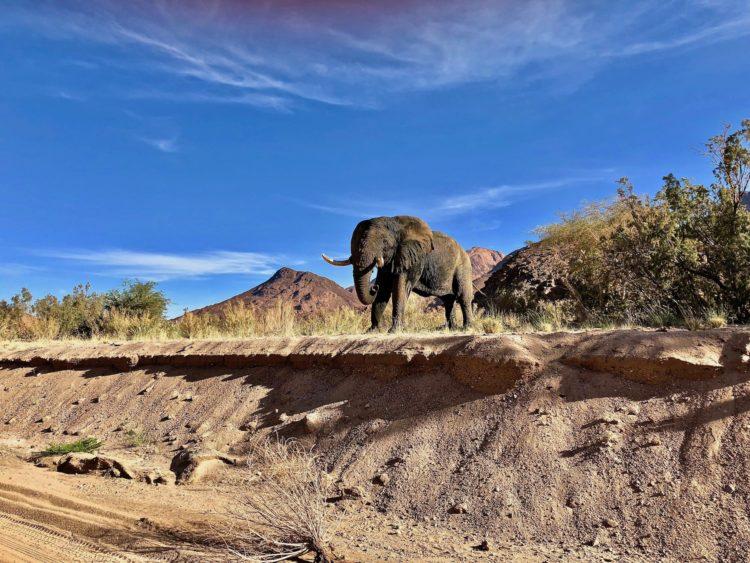 Ein Elephant schaut zu
