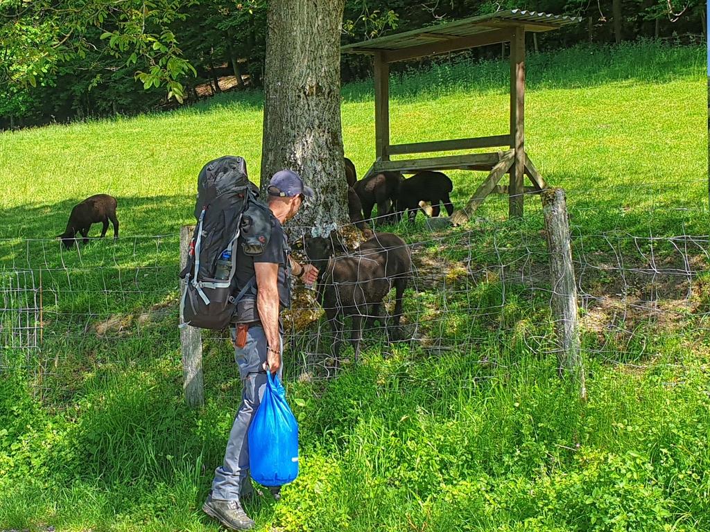 Discover Wilderness – Survivalkurs für Anfänger