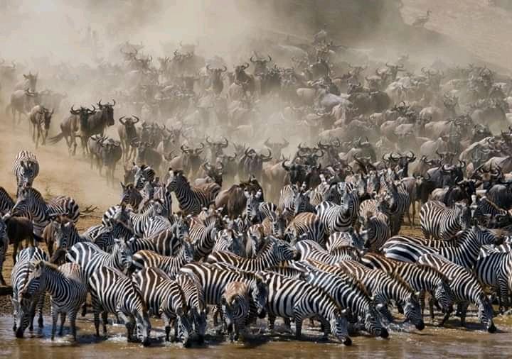 Jackpot Safaris Choice: Privat-Safari in Tansania