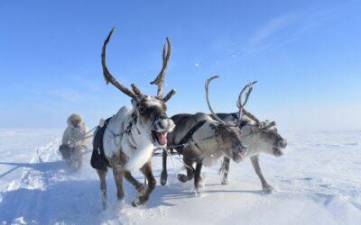 Dolganen, zu Besuch bei den nordsibirischen Rentiernomaden